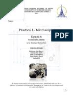 PRACTICA 1 MICROSCOPIO - REPORTE