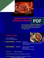 7.- Semiología AP Urinario