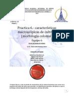 Practica 6 Morfologia Colonial Macroscopic A)