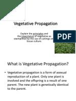 Vegetative Propagation cape biology