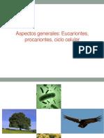 (1) Eucariontes, Procariontes y División Celular