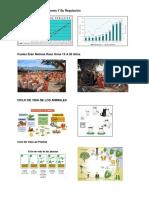 Crecimiento de Poblaciones Y Su Regulación IMAGENES