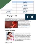 Etapa prenatal.docx