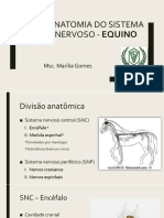 anatomiadosistemanervoso-equino-171126181717 (2).pdf