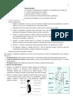 Resumen 2 Anato I