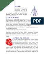 Qué Es El Sistema Cardiovascular