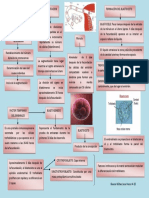 Fecundacion e Implantacion 2
