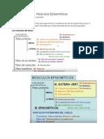 15 Demayo_Musculos Episomiticos