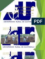 Proyecto de Siembra de Brócoli en Carcha. 2016