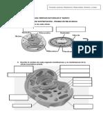 Guía de nutrición celular..pdf