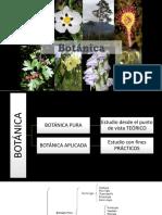 BOTANICA CLASE 1 Introduccion a la botanica pura y aplicada.pptx