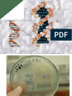 Genetica Molecular y Microbiana 2016 i