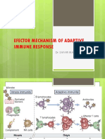 Efector Mechanism of Adaptive Immune Response