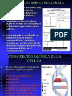 ESTRUCTURA CELULAR.pdf
