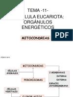 t11orgnulosenergticosmitocondrias-111005100748-phpapp02