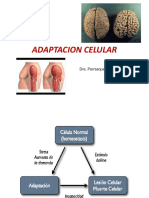2 Adaptacion Celular