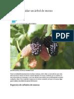 Manual de Moricultura