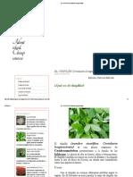 EL CHIPILÍN (Crotalaria Longirostrata)