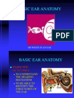 Basic Ear Anatomy
