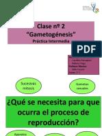 Clase 2 Gametogenesis