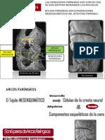 arcosfaringeosiyii1-121014224030-phpapp02