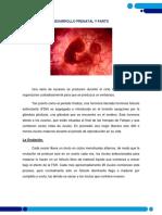 Desarrollo Prenatal y Parto