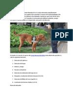 Trabajos de Perros