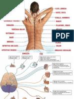 Quiro Practica Medicina alternariva