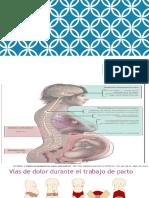 Analgesia obstetrica Chesnut