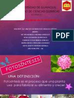 Botanica Exposicion