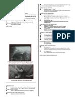 6767238-Parasitology-Lec-4-Anisakis-Kat.doc