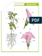 Maleta Viajera - Partes de una planta.pdf