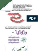 Estructuras de Las Proteinas