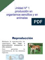 04 Reproduccion en Organismos