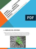 Siembra Cultivo y Producción de Pepino