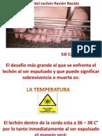 Lechon Recien Nacido 120222101407 Phpapp01