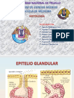 Tejido Epitelial Glandular Final