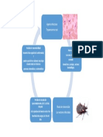Chagas Historia Natural