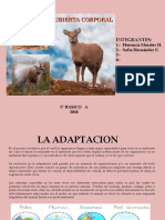 ADAPTACION DE CUBIERTA CORPORAL.pptx