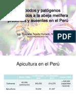 2.Artrópodos Patógenos Abeja FAO_Graciano Tejada