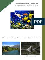 Ecología de ecosistemas (3ra prueba)