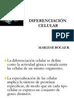 Diferenciación celular- marlene bocaz