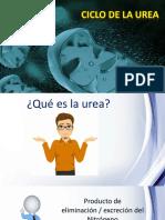 tmp_16542-CICLO DE LA UREA-271124248.pptx