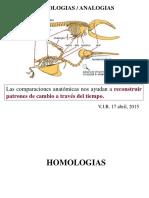 Homologias Analogias 15.ppt