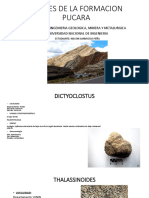 Fosiles Del Cuadrangulo de Pasco