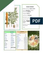 Complementando El Album Botanico_cta 1 Año