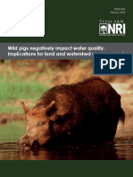 Wild pigs negatively impact  water quality