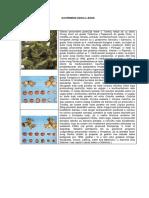 Savremeni uzgoj leske.pdf