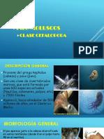 Cefalopoda.pdf
