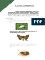 Control de Plagas y Enfermedades